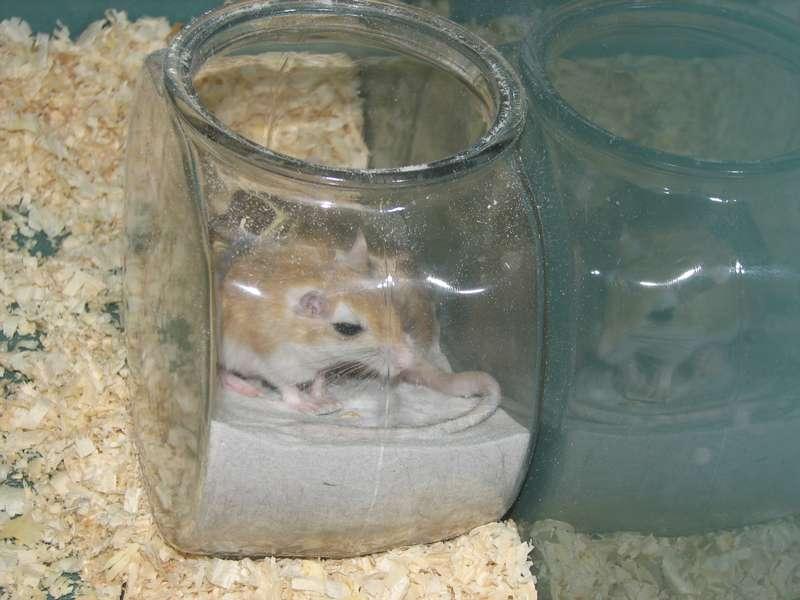 Bain de sable Chinchilla