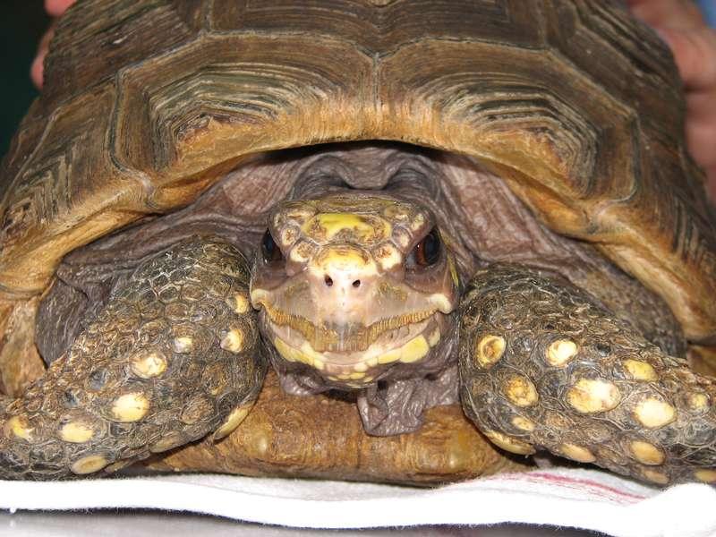 Bonne tortue